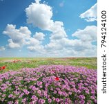 spring flowers  in meadow.... | Shutterstock . vector #794124100
