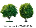 isolated green trees on white...   Shutterstock . vector #794131954