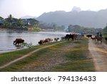 Landscape Of Cow Walking Besid...