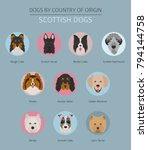 dogs by country of origin.... | Shutterstock .eps vector #794144758