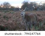 london. richmond park. | Shutterstock . vector #794147764