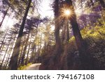crisp morning sun rays pass... | Shutterstock . vector #794167108