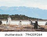 gentoo penguin  pygoscelis... | Shutterstock . vector #794209264