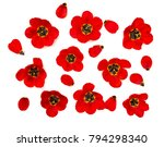 beautiful flowers red tulips on ...   Shutterstock . vector #794298340