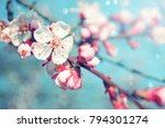 spring border background with... | Shutterstock . vector #794301274
