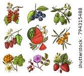 set berries. raspberry ... | Shutterstock .eps vector #794315488
