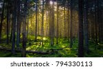 Cozy Mossy Green Forest With...
