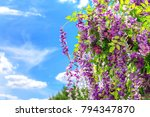 spring blooming flowers in the... | Shutterstock . vector #794347870