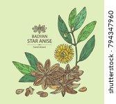 badyan  star anise  fruit ... | Shutterstock .eps vector #794347960