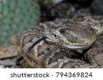 Mojave Rattlesnake Portrait  ...