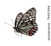 isolated butterfly | Shutterstock . vector #79437496