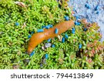 Slug With Slug Pellet