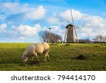sheep grazing near the mill.... | Shutterstock . vector #794414170