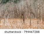 Cattails Surround Trees In Thi...