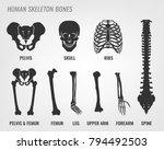human skeleton bones. vector... | Shutterstock .eps vector #794492503