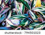 pattern of green leaves and...   Shutterstock . vector #794501023