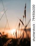 nature grass flower in sunset... | Shutterstock . vector #794506330