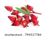 hibiscus sabdariffa or roselle... | Shutterstock . vector #794517784