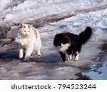two cute fluffy cat together... | Shutterstock . vector #794523244