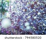 ower grass flower with sunset...   Shutterstock . vector #794580520