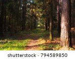 the summer forest  | Shutterstock . vector #794589850