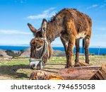 donkey on isla del sol ... | Shutterstock . vector #794655058