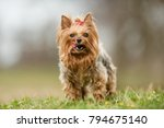 healthy purebred dog... | Shutterstock . vector #794675140