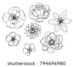ink  pencil flower sketch... | Shutterstock .eps vector #794696980