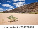 panoramic view of the dry... | Shutterstock . vector #794730934