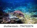 sea turtle in blue water | Shutterstock . vector #794732074