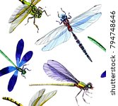 Stock photo exotic dragonfly wild insect pattern in a watercolor style full name of the insect dragonfly 794748646
