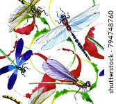 exotic dragonfly wild insect... | Shutterstock . vector #794748760