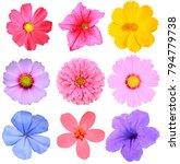 collection set of flower heads... | Shutterstock . vector #794779738