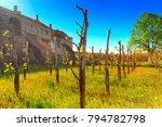 vineyard view of alaverdi... | Shutterstock . vector #794782798