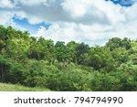 beautiful vibrant background... | Shutterstock . vector #794794990