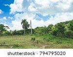beautiful vibrant background... | Shutterstock . vector #794795020