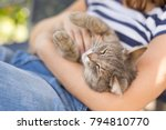 furry tabby cat lying on its... | Shutterstock . vector #794810770