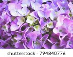 beautiful pattern. pink... | Shutterstock . vector #794840776