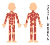 stylized muscle anatomy chart ... | Shutterstock .eps vector #794886439