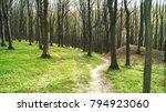 natural forest  sunbeams... | Shutterstock . vector #794923060