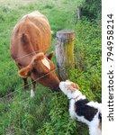 Meeting Between Friends
