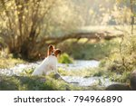 dog papillon in the park on... | Shutterstock . vector #794966890