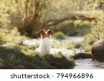 Stock photo  dog papillon in the park on the river pet on the nature in the morning 794966896