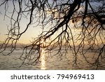 bare weeping tree over lake or... | Shutterstock . vector #794969413