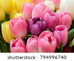 colorful tulips close up flower ... | Shutterstock . vector #794996740