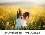 Stock photo dog papillon on in a field of flowers spring pet 795008686