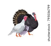 Turkey Gobbler And Hen  Male...