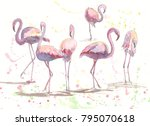watercolor artwork with pink... | Shutterstock . vector #795070618
