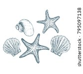 shells and starfish on white...   Shutterstock .eps vector #795097138