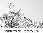 tree branch and leaf  ...   Shutterstock . vector #795097876